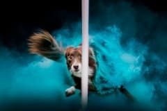Jess-Bell-fotografo-DogSolution-Daycare-para-caes-007