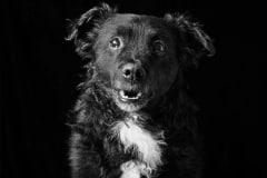 emmaobrien-photography-dogsolution-daycare-para-caes-DSC_8861
