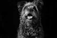 emmaobrien-photography-dogsolution-daycare-para-caes-DSC_9095