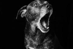 emmaobrien-photography-dogsolution-daycare-para-caes-DSC_9547