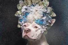 sophie-gamand-pitbulls-flowers-daycare-de-caes-dogsolution-002