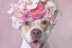 sophie-gamand-pitbulls-flowers-daycare-de-caes-dogsolution-003