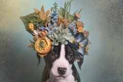 sophie-gamand-pitbulls-flowers-daycare-de-caes-dogsolution-016