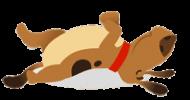 dog.fogos21
