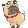 dog.guia3_-1