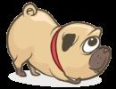 dog.guia3_
